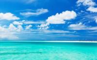 Isole Turks e Caicos: tra coralli e tartarughe