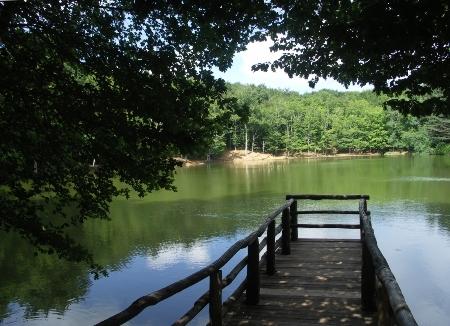 Riserve naturali: la Foresta Umbra