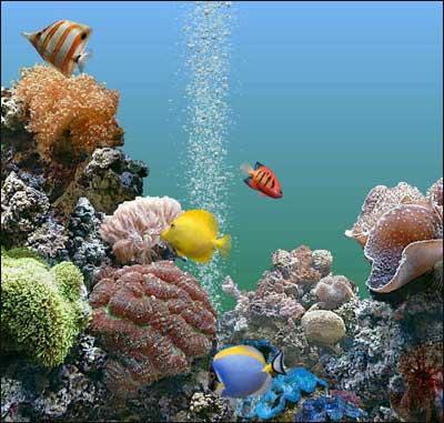 Gli acquari pi belli d 39 europa viaggi fantastici for Fondo acquario