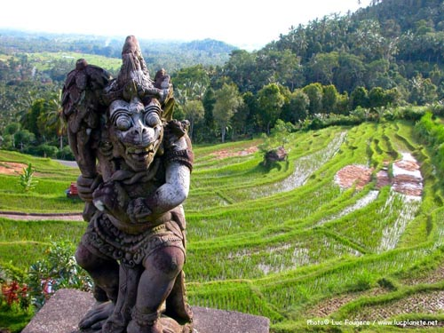 Bali: come, quando e documenti necessari