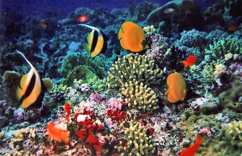 Uno spettacolo naturale chiamato barriera corallina