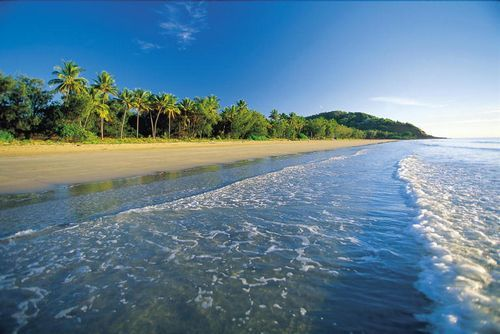 La foresta pluviale e la fauna dei Caraibi