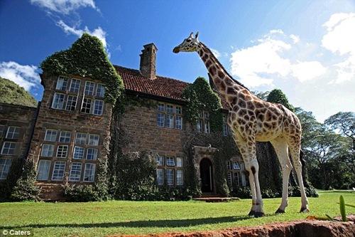 Kenya: dormire nella Villa delle Giraffe