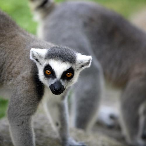 Madagascar, guida breve e consigli di viaggio