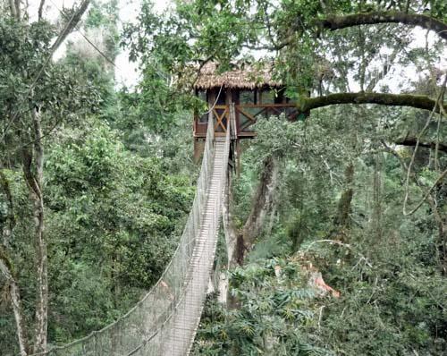 Foresta amazzonica case sugli alberi viaggi fantastici - Costruire case sugli alberi ...