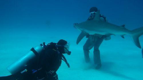 immersioni squali