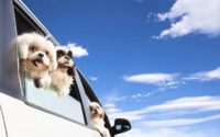 Viaggi dog friendly per un'estate perfetta